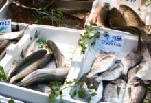 Pesca non autorizzata, maxi sequestro a Manfredonia