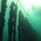 """Le osservazioni del CBM alla richiesta della società """"Poseidon srl""""  per la realizzazione di un allevamento di mitilicoltura"""