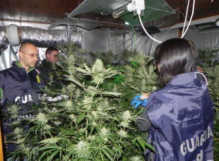 Scoperte 12 piante di canapa indiana in una palazzina di Corso Margherita. Un arresto