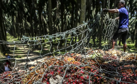Olio di palma: brutte notizie per Eni, buone notizie per le foreste