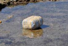 Molfetta: 26 kg di marijuana recuperati in mare nei pressi di Torre Gavetone