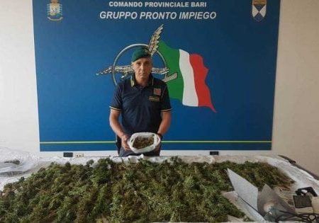 Bisceglie, 4 chili di marijuana in casa: arrestato spacciatore 30enne
