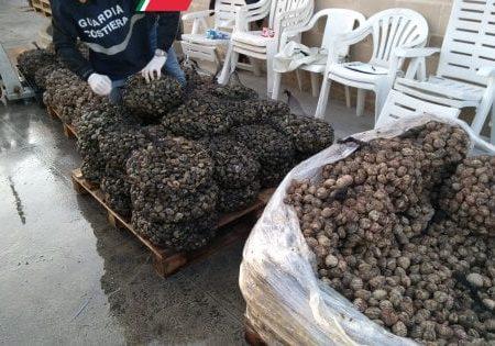 Sequestrati 11 quintali di pesce per i cenoni di Natale: polpi e seppie erano scaduti dal 2011