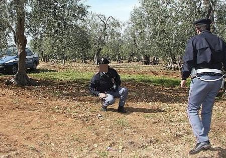 """Puglia, razzia di olive e uva nelle campagne: Coldiretti annuncia le ronde. """"Danni per 300 milioni"""""""