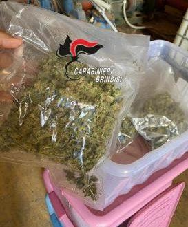 Brindisi, 12,5 kg di droga tra le piante della sua azienda di ortaggi: arrestato