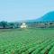 Le mani dei clan foggiani sui fondi Ue dell'agricoltura
