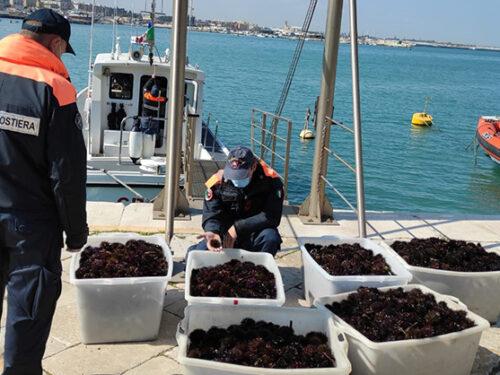 Attività di contrasto alla pesca illegale: 8.000 ricci di mare sequestrati dalla Guardia Costiera