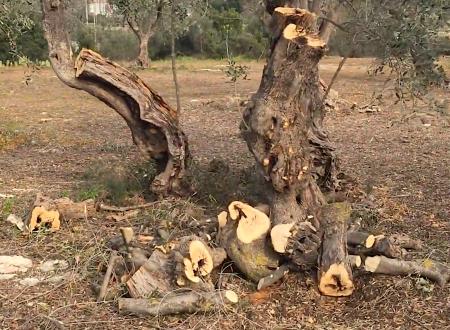 In via Sibilla Aleramo, tagli di alberi e discariche abusive di inerti